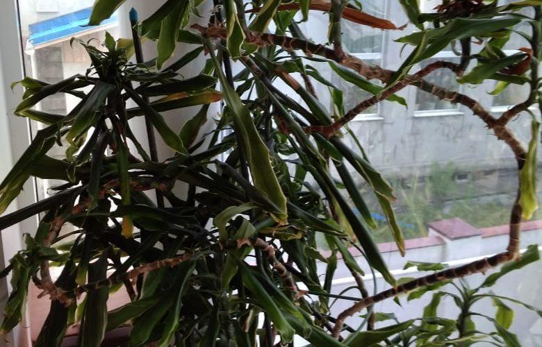 Зелёное растение высокое возможно бамбук или фикус