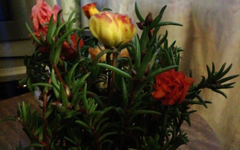 Зелёное растение с разными цветами