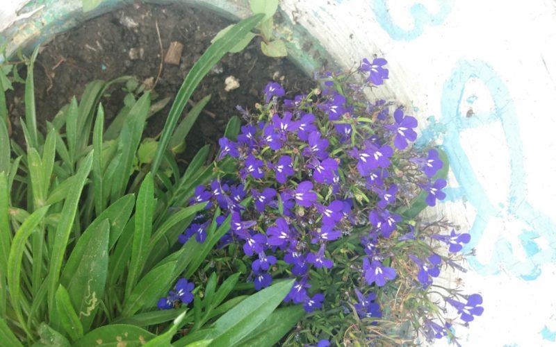 Что за цветок — название?