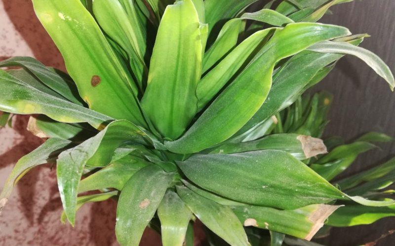 Зелёный цветк
