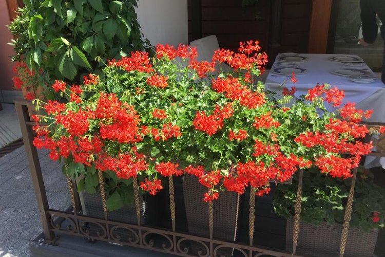 Здравствуйте,Как называется растение?