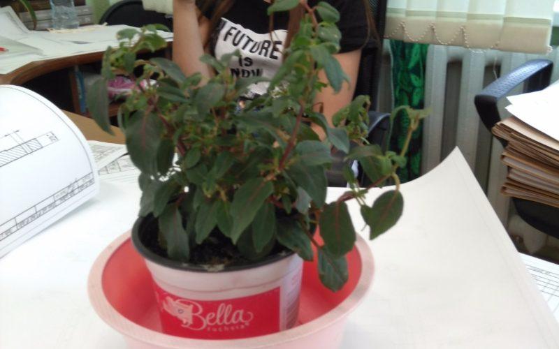 Зелёное растение с цветочками