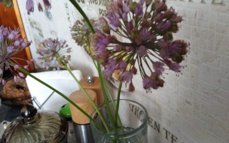 зелёное растение с сиреневыми цветами