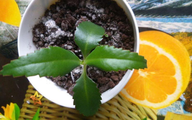 Зелёное растение