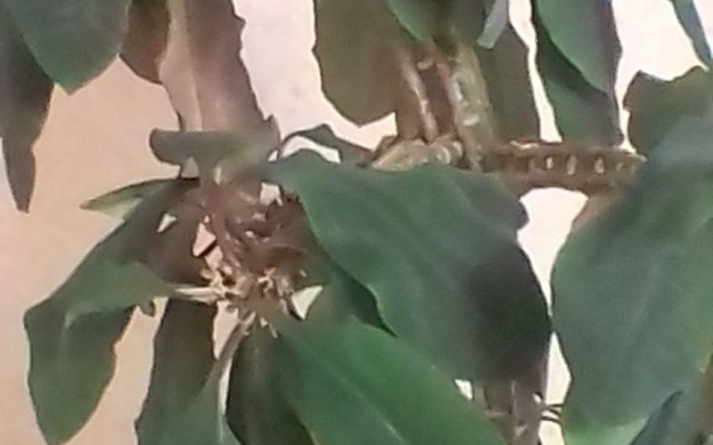 Зелёное растения