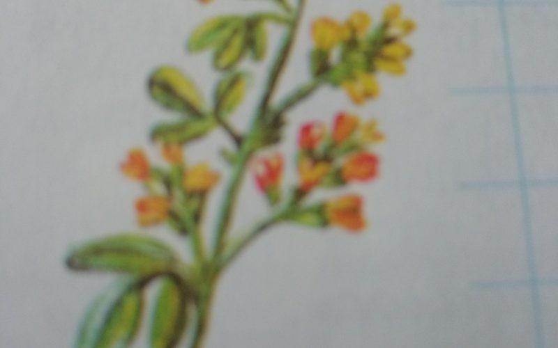 Что за растение помогите
