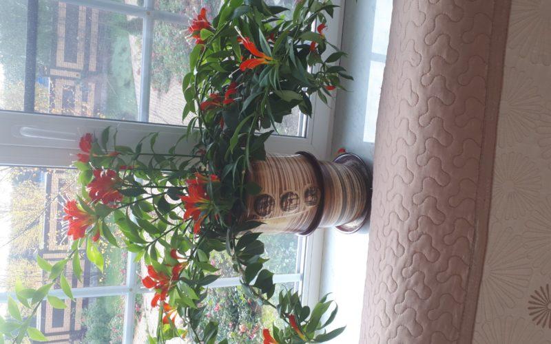 Зеленое растение с желто-оранжевыми цветами