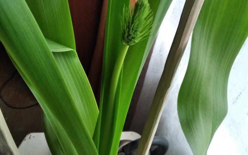 Длинные зелёные листья