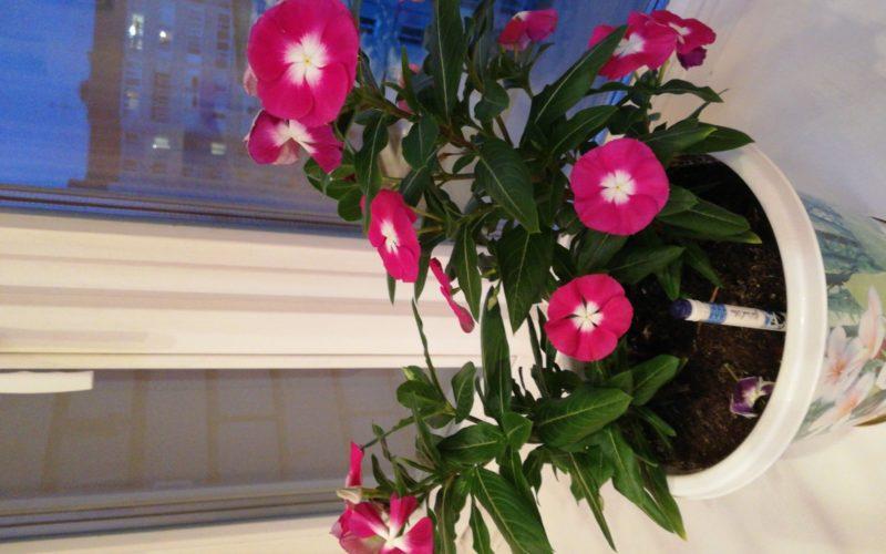 зеленый цветок с красными маленькими цветками