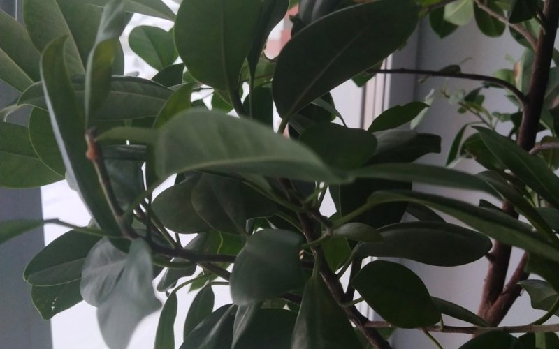 Зеленое растение, не знаю цветет или нет.