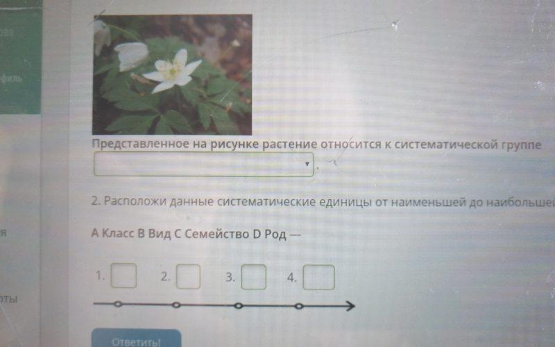 Решите пожалуйста ещё вопросы. Растение зелёное с жёлтыми лепестками