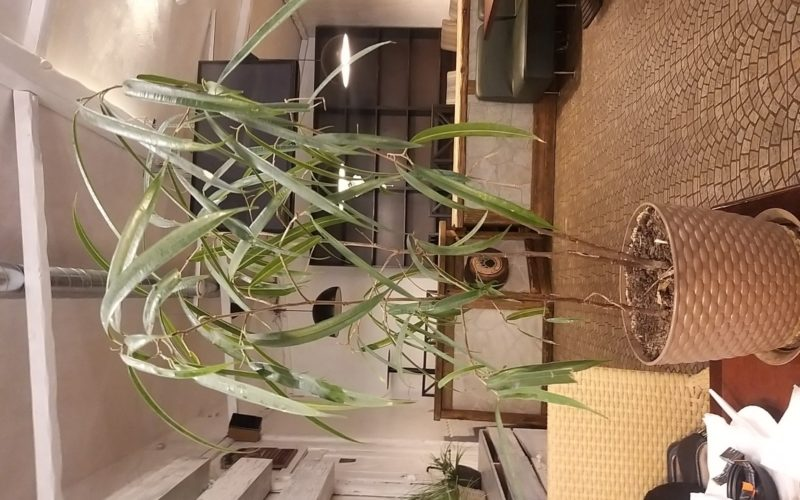 Зелёное растение с тонкими листьями