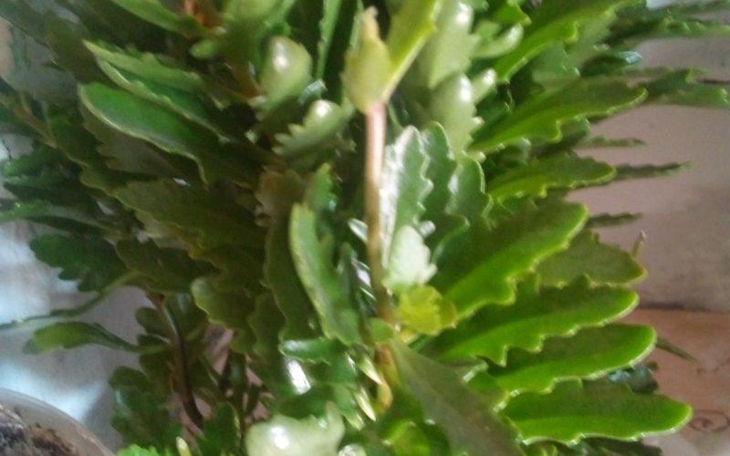 Жёсткие зелёные листья