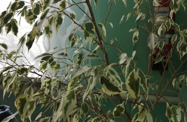 Определить растение