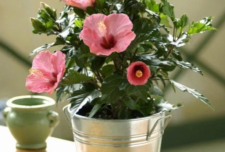 Цветок с цветами в виде кувшинок