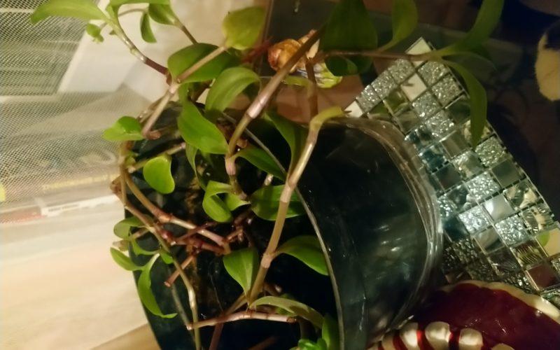 Какое растение домашнее?