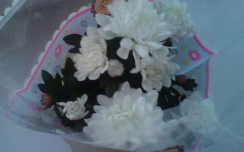Комнатное растение с белыми цветами