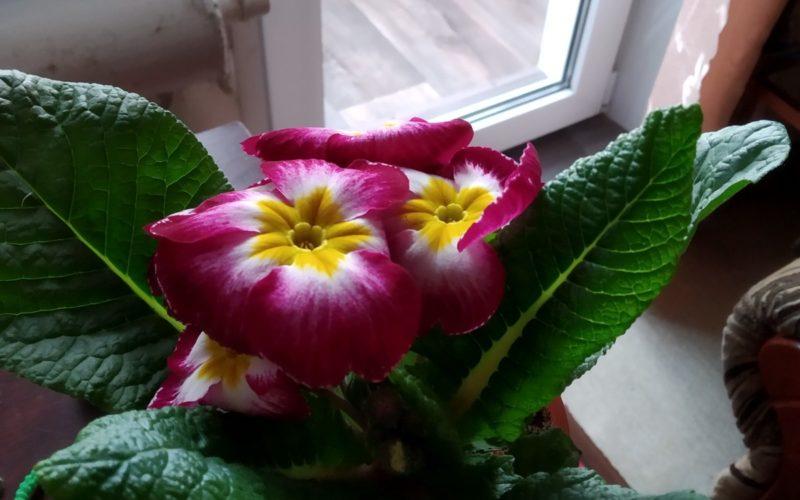 Зелёное растение с цветками