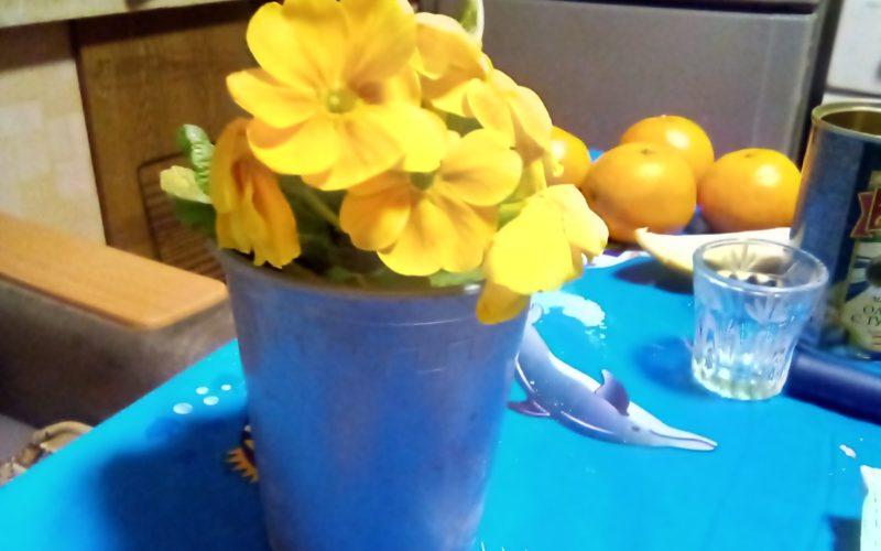 Цветок с желтыми цветами