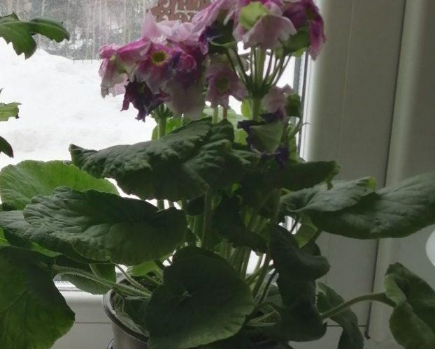 Комнатной растение