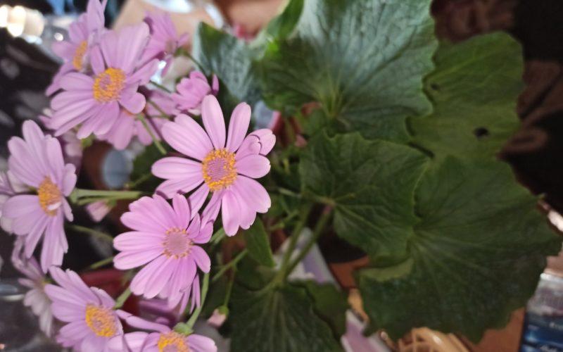 Какой это цветок