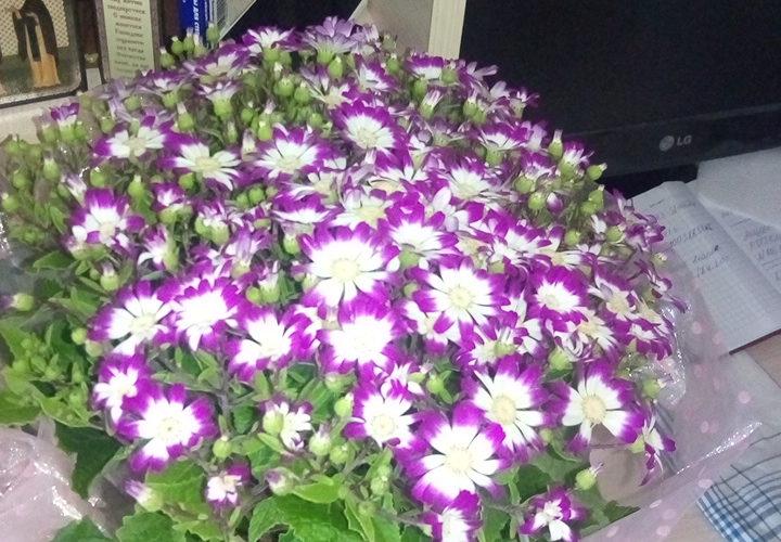 Зеленое растение с фиолетовыми цветками