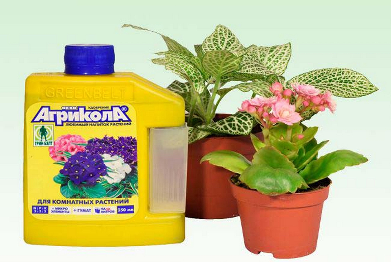 Агрикола для комнатных растений: инструкция по применению удобрений, отзывы цветоводов