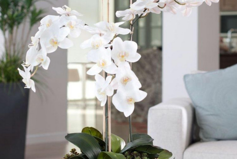 Виды орхидей: названия, фото и описание листьев и цветов комнатных и диких растений, сколько их и какие бывают, а также особенности ухода в домашних условиях