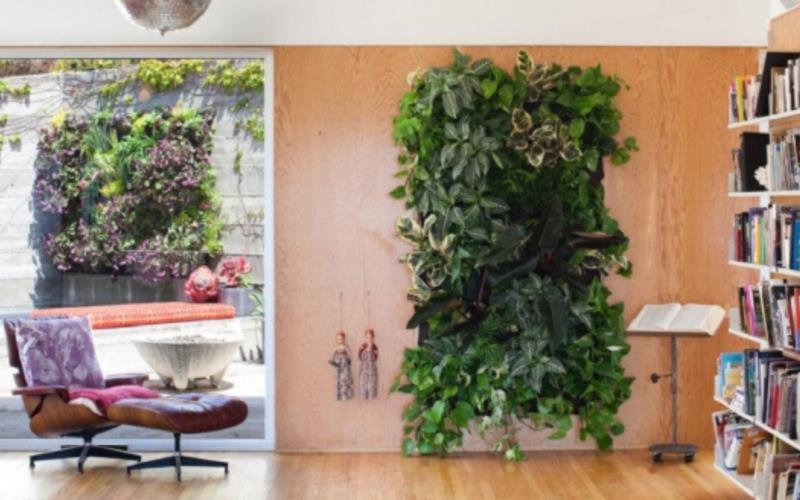 Вьющиеся комнатные растения: названия и виды, уход