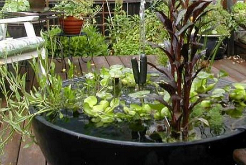 Комнатные растения в бутылках и банках: как выращивать растения в воде
