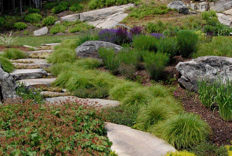 Фото травы осоки с листьями, фото осоки декоративной