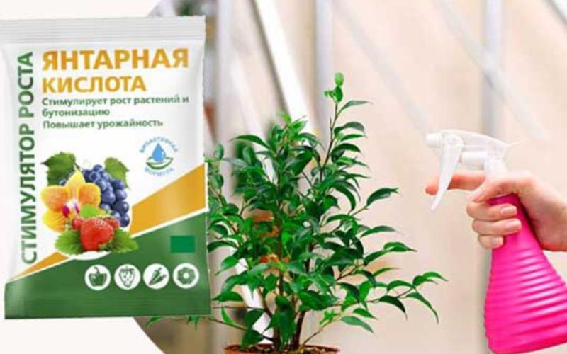 Янтарная кислот для удобрения растений: как использовать таблетки при поливе